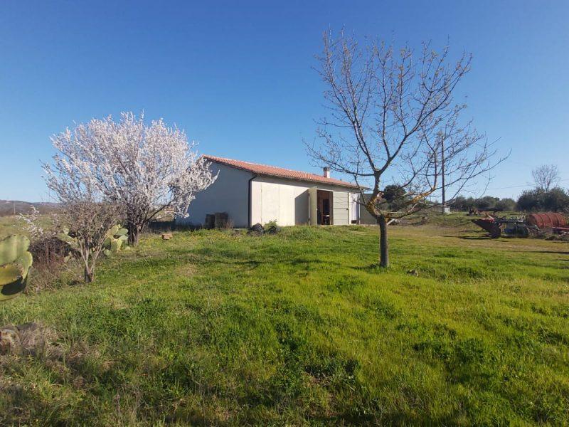 272B Azienda Agricola in vendita in Maremma fra Saturnia e Montemerano